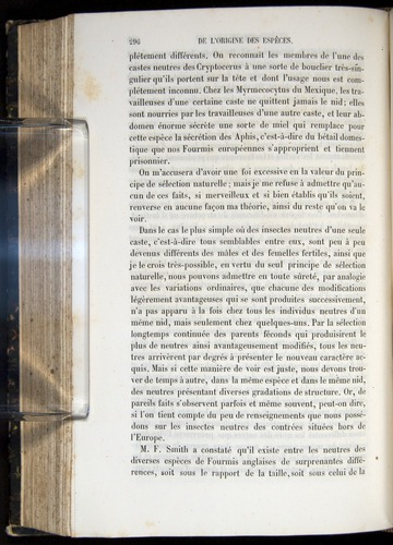 Image of Darwin-F656-1866-00296