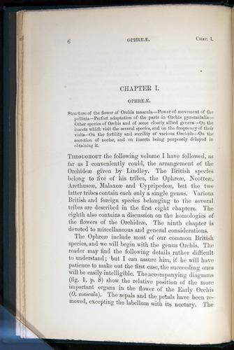 Image of Darwin-F803-1882-006