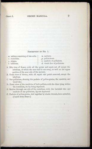 Image of Darwin-F803-1882-009