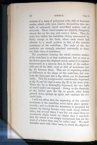 Image of Darwin-F803-1882-010
