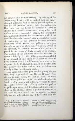 Image of Darwin-F803-1882-013