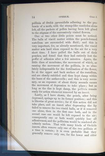 Image of Darwin-F803-1882-014