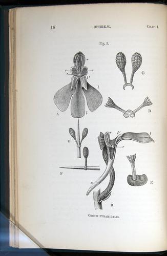 Image of Darwin-F803-1882-018