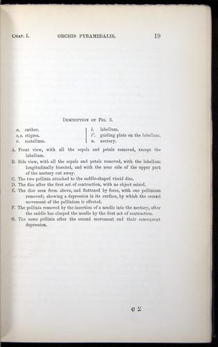 Image of Darwin-F803-1882-019