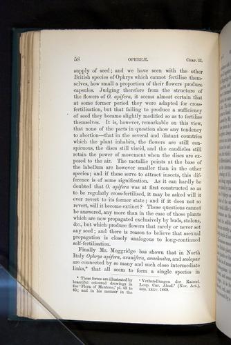 Image of Darwin-F803-1882-058
