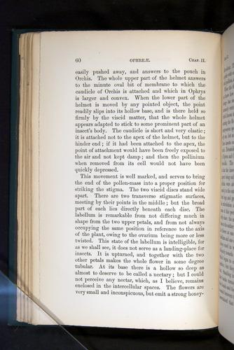 Image of Darwin-F803-1882-060