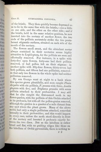 Image of Darwin-F803-1882-067