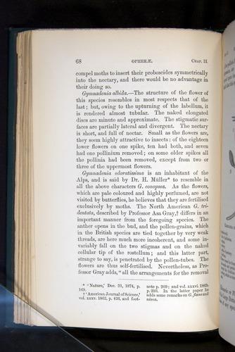 Image of Darwin-F803-1882-068