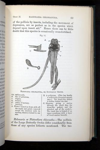 Image of Darwin-F803-1882-069