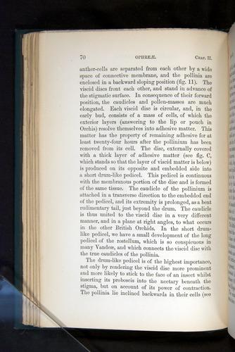 Image of Darwin-F803-1882-070
