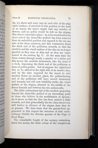 Image of Darwin-F803-1882-071