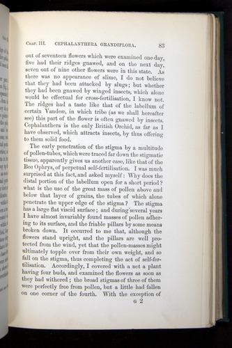 Image of Darwin-F803-1882-083