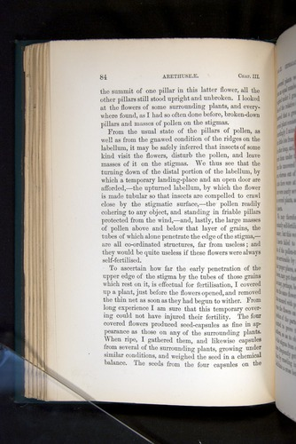 Image of Darwin-F803-1882-084