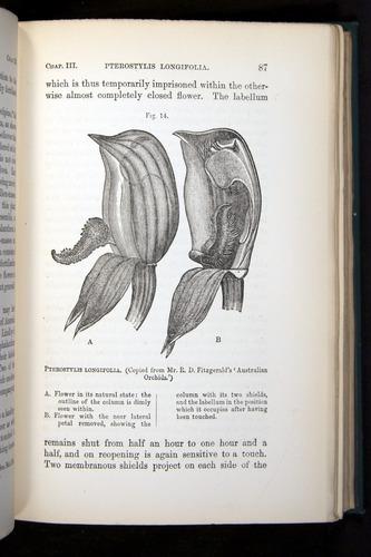 Image of Darwin-F803-1882-087