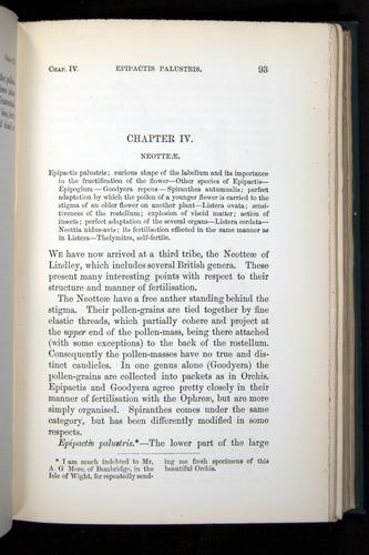 Image of Darwin-F803-1882-093