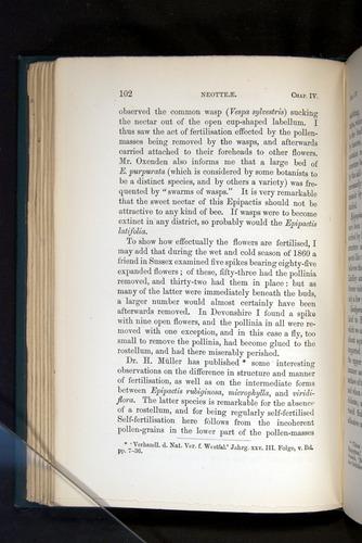 Image of Darwin-F803-1882-102