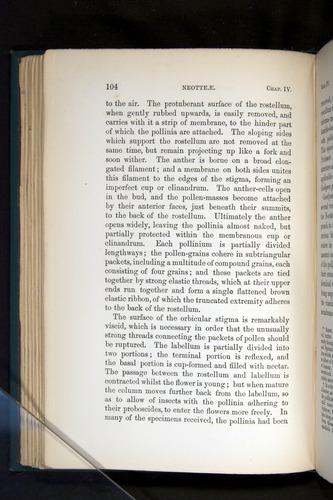 Image of Darwin-F803-1882-104