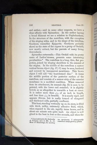 Image of Darwin-F803-1882-106