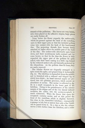 Image of Darwin-F803-1882-110