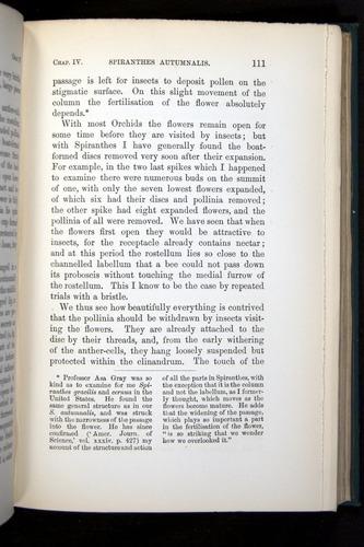 Image of Darwin-F803-1882-111