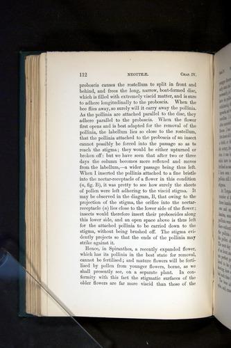 Image of Darwin-F803-1882-112