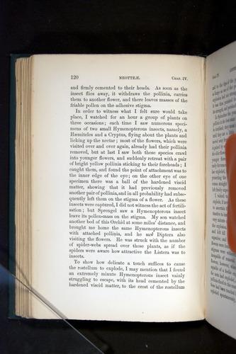 Image of Darwin-F803-1882-120