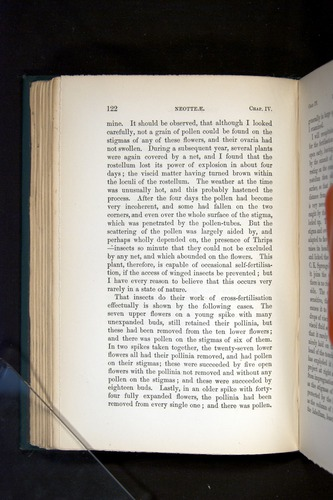 Image of Darwin-F803-1882-122