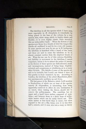 Image of Darwin-F803-1882-138