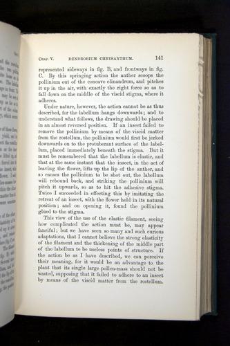 Image of Darwin-F803-1882-141