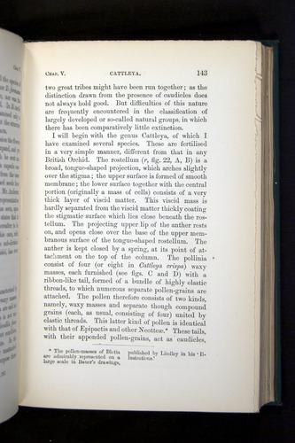 Image of Darwin-F803-1882-143