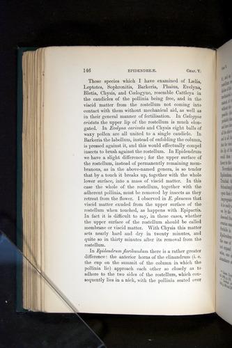 Image of Darwin-F803-1882-146