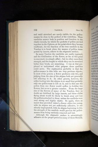 Image of Darwin-F803-1882-152