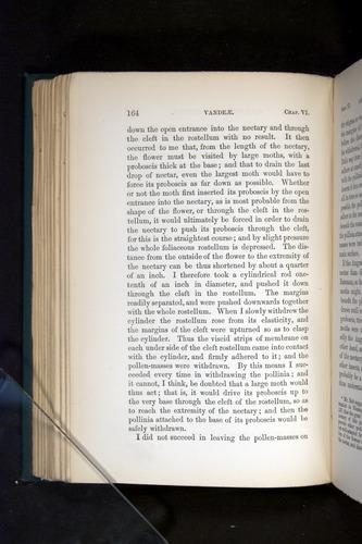 Image of Darwin-F803-1882-164