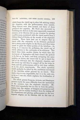 Image of Darwin-F803-1882-169