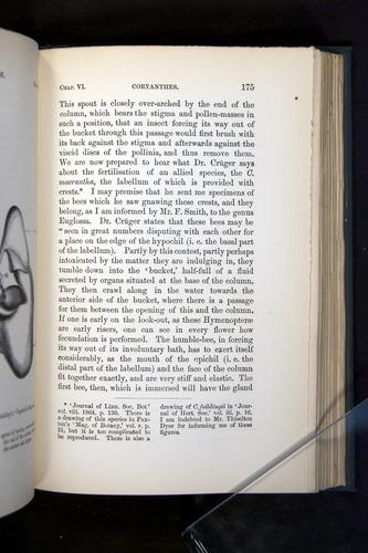 Image of Darwin-F803-1882-175