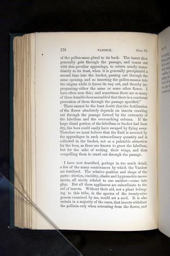 Image of Darwin-F803-1882-176