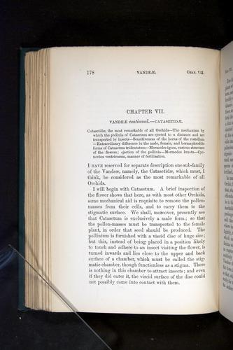 Image of Darwin-F803-1882-178