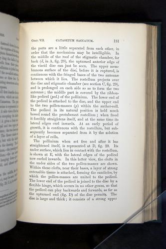 Image of Darwin-F803-1882-181
