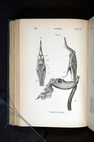 Image of Darwin-F803-1882-182