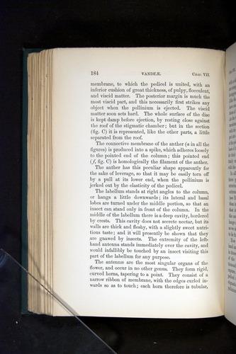 Image of Darwin-F803-1882-184