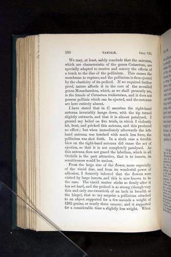 Image of Darwin-F803-1882-190