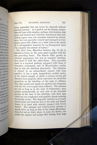 Image of Darwin-F803-1882-203
