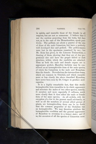 Image of Darwin-F803-1882-204