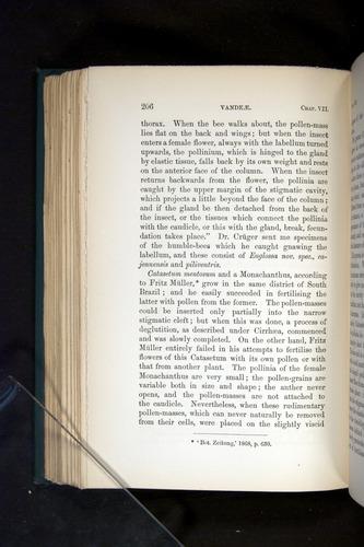 Image of Darwin-F803-1882-206