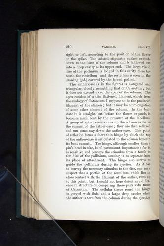 Image of Darwin-F803-1882-210