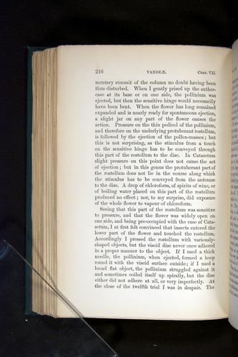Image of Darwin-F803-1882-216