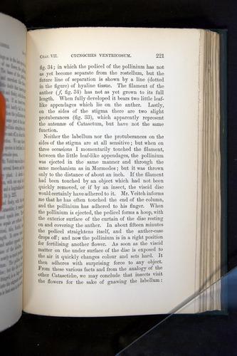 Image of Darwin-F803-1882-221