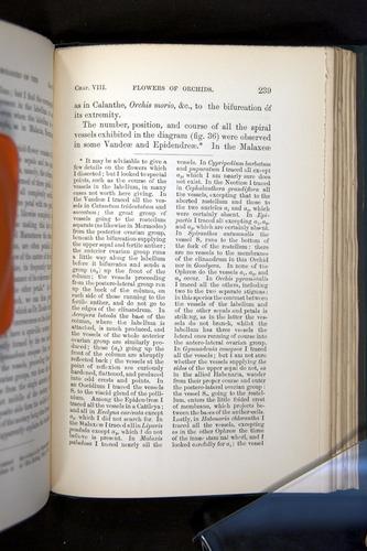 Image of Darwin-F803-1882-239