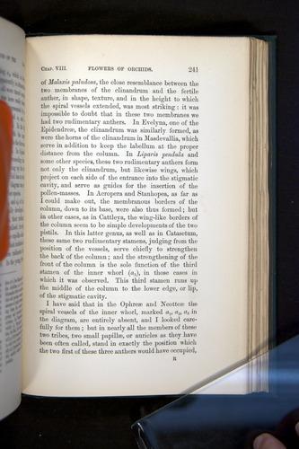 Image of Darwin-F803-1882-241