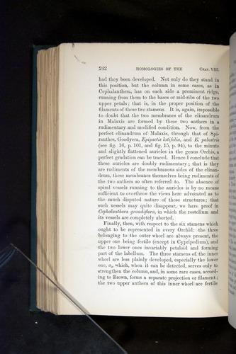 Image of Darwin-F803-1882-242